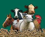 Línea de Producción de Pellets de Alimentos Línea de Producción de Pellets de Alimentos para Animales Pequeño Molino de Pellets de Biomasa