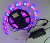 3528 2835 12V coloridos 24O LED do controlador de chave tira RGB