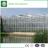 فحمات متعدّدة صفح/بلاستيك/[غرين هووس] زجاجيّة لأنّ خضرة/حديقة