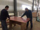 Madera contrachapada comercial de la haya de Alemania de la madera para los muebles