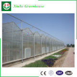 Agricultura Multi Span PC Casa Verde Folha com sistema de hidroponia