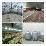 Equipamento da alimentação de aves domésticas para a produção da grelha