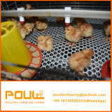 Jaula DE Pollo Pullet de Kooi van het Kuiken van de Baby voor Huis van de Kip van de Baby van de Dag het Oude