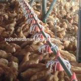 完全セットの高品質の自動家禽の農機具
