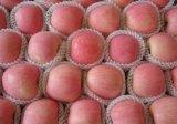 Sweet juteuse Fuji fraîches Apple nouvelle récolte