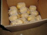 Export-neues Getreide-frische Kartoffel