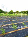 Contrôle des mauvaises herbes tissu PP tissés pour la plantation de fruits de bleuets