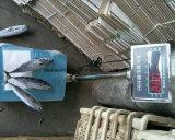 Pescados congelados del bonito para conservado
