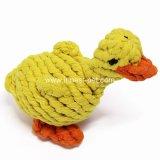 Lustiger Baumwolseil-Gelb-Haustier-Hund, der Spielzeug-Ente spielt