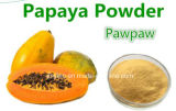 Poeder van het Uittreksel van het Blad van de Papaja van het Poeder van de Papaja van het Vruchtesap het Droge