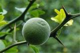 高品質の柑橘類のAurantiumのエキスSynephrine