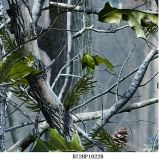 Numéro neuf B032kmc12b de film d'impression de transfert de l'eau de configuration de camouflage