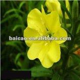 Nº CAS 90028-66-3 de aceite esencial natural Puro Aceite de Onagra Aceite con Fragancia de aceites de base cosmética Cuidado de la piel a diario extracto de planta química médica de masaje