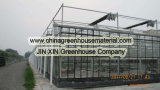 Prix de fabrication de type serre chaude de Venlo en verre
