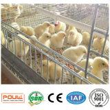 Bon matériel de cages de poulet de poulette des prix et de qualité à vendre (un type bâti)