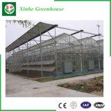De Serre van het Glas van het Type van Venlo voor Groente en het Groeien van Bloemen