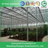 Tipo poco costoso serra di vetro di Venlo per Growing dei fiori e dell'ortaggio