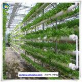 Qualitäts-einlagiges Tunnel-Plastikfilm-Gewächshaus für Gemüse-Zucht