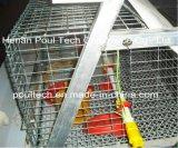 オートメーションの熱い小さいひよこのための新しい家禽の養鶏場のケージ装置か風邪は電流を通されて浸った(タイプフレーム)