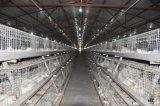 Cage de poulet à rôtir avec le système automatique de matériel pour la ferme avicole (un type)