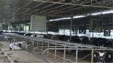 屋根によって取付けられる換気の排気の軸商業ファン