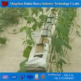 Sistema di coltura idroponica di Nft per l'orticoltura