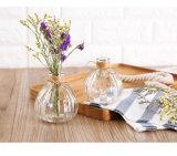 Vaso & latta di innaffiatura di vetro