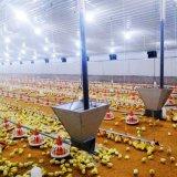 Conjunto completo de equipamentos de exploração de aves de capoeira automática para frangos de corte
