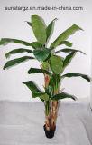 Дерево бананов W/3 соединительных линий и 25lvs покрытием для отеля стиле (50046)