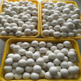 Handmade шарики сушильщика шерстей Новой Зеландии 100% шариков войлока шерстей для прачечного