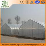 Túnel de Agricultura Single-Span filme plástico para plantação com efeito de estufa