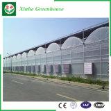Sistema di coltura idroponica delle serre del film di materia plastica per gli ortaggi/fiori/frutta
