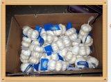 Knoblauch-Verpackung im Karton