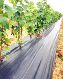 SGSの証明書が付いているPPによって編まれる雑草防除シート