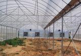 Multi дом полиэтиленовой пленки земледелия пяди Vegetable зеленая
