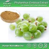 100% натуральные Phyllanthus Emblica извлечения порошок 40% Polyphenol