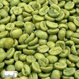 Grüner Kaffeebohne-Auszug