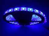 High Quanlity Waterproof 5050 Flexible LED Strip Lighting