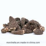 Secado Morchella Stemless de setas orgánicas alimentos verdes