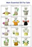 工場供給の純粋で自然なレモングラスの精油、レモングラスオイル
