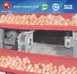 Strato dell'azienda avicola e gabbia del pollo da carne per il pollo