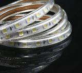 높은 광도 SMD 5050 색깔 변경 LED 지구