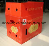 4 열려있는 상자 또는 재상할 수 있는 폴리프로필렌 Corflute 과일 상자 3mm 4mm 못 추가 처리에 5mm