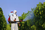 Выдержка Matrine завода высокого качества фабрики GMP для пестицида