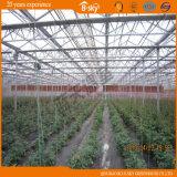 꽃을%s 상업적인 다중 경간 유리제 온실