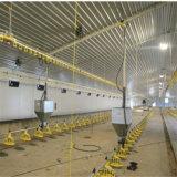 Qualité directement ferme de poulet de structure métallique d'usine de la grande