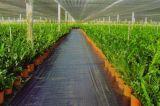 PP 지표 식피, 위드 방벽 직물, 딸기 정원에 있는 위드 매트