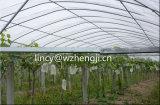 Tessuto non tessuto di prezzi di fabbrica della Cina 100% pp Spunbond per il coperchio agricolo