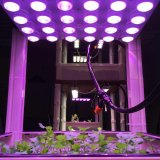 O diodo emissor de luz cresce o módulo leve para a fábrica da planta