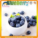 Extracto azul de la baya del suplemento orgánico del arándano